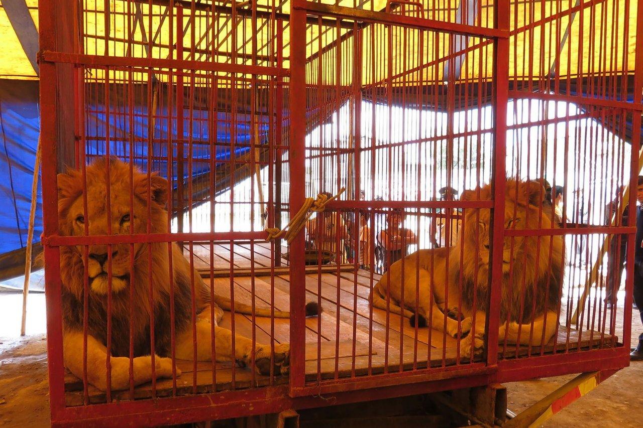 10_09_LionRescue_01