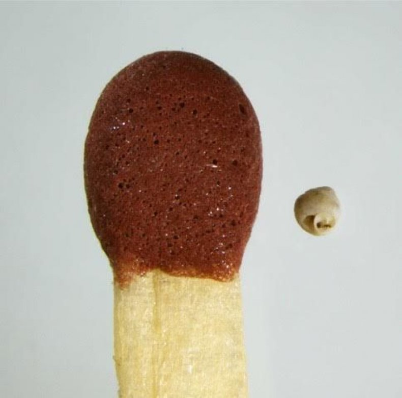 snail-match-head