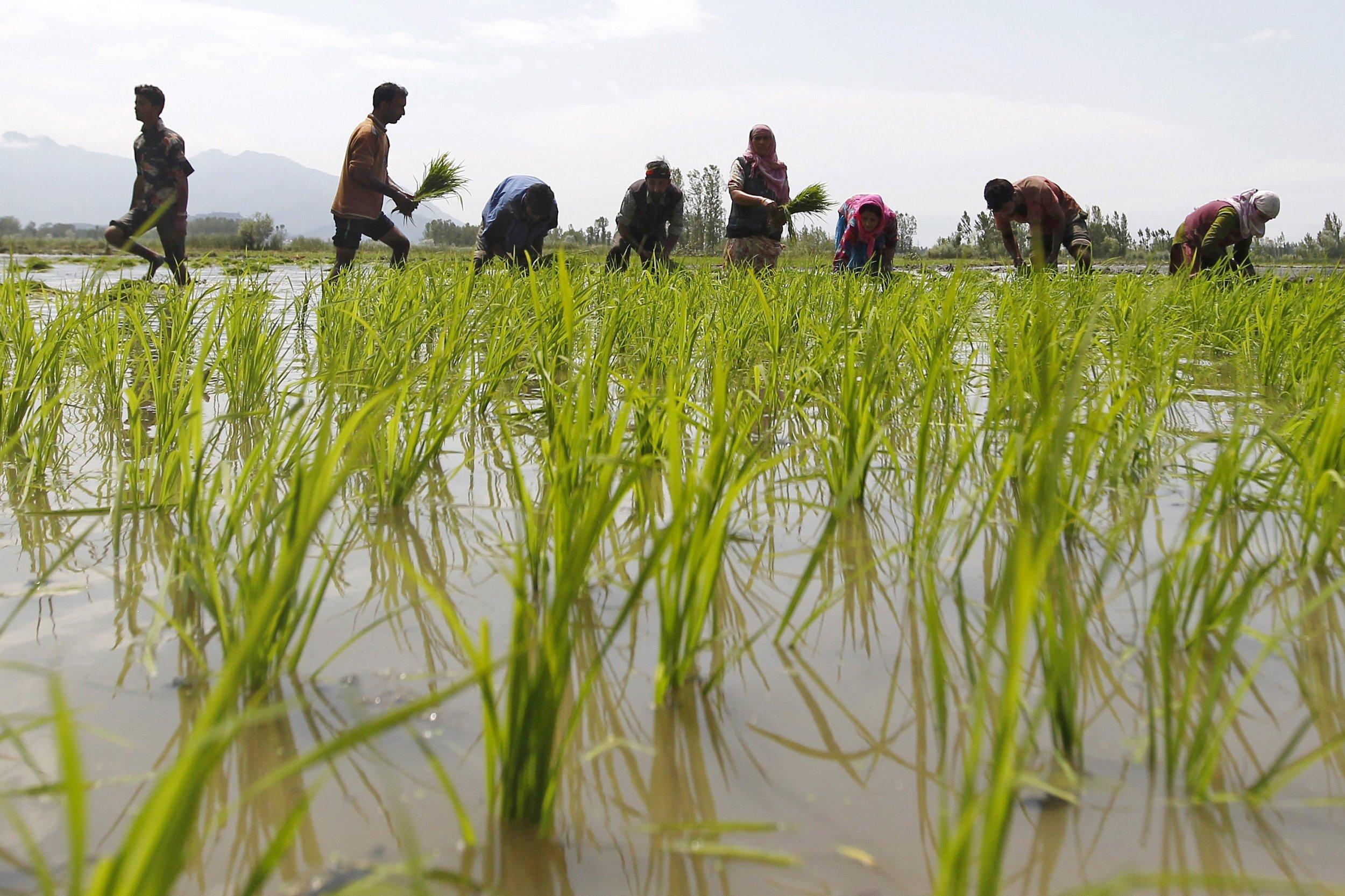 1002_India Farming