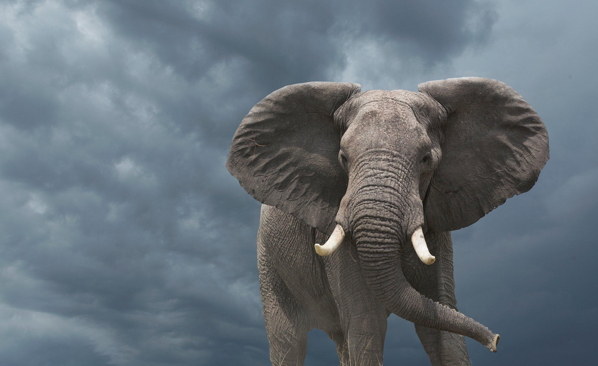 10_16_Elephant_Cancer_01