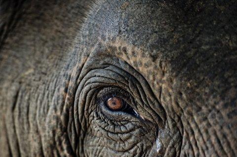 10_16_Elephant_Cancer_10