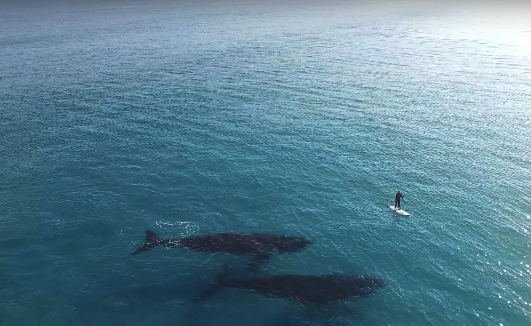 Whale Australia
