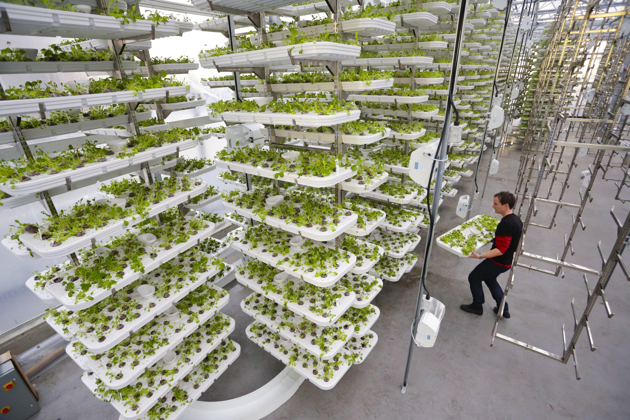 Vertical Farms Across The World