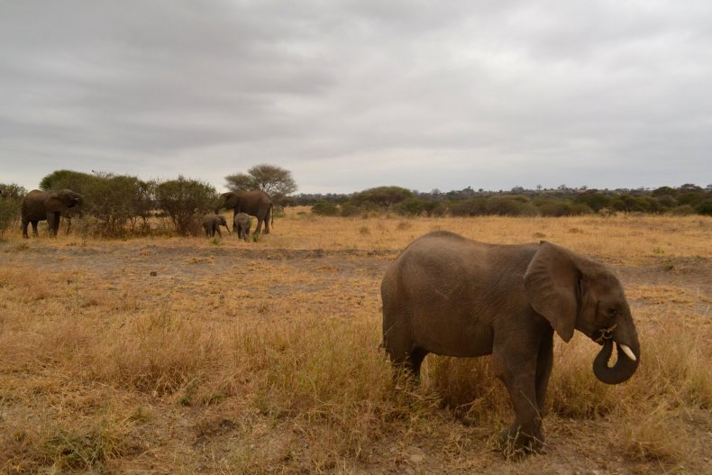 10_22_elephants_02