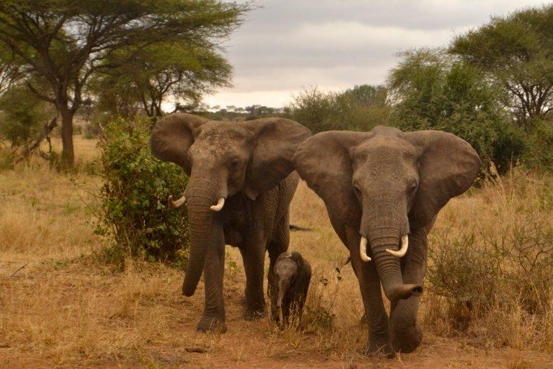 10_22_elephants_03