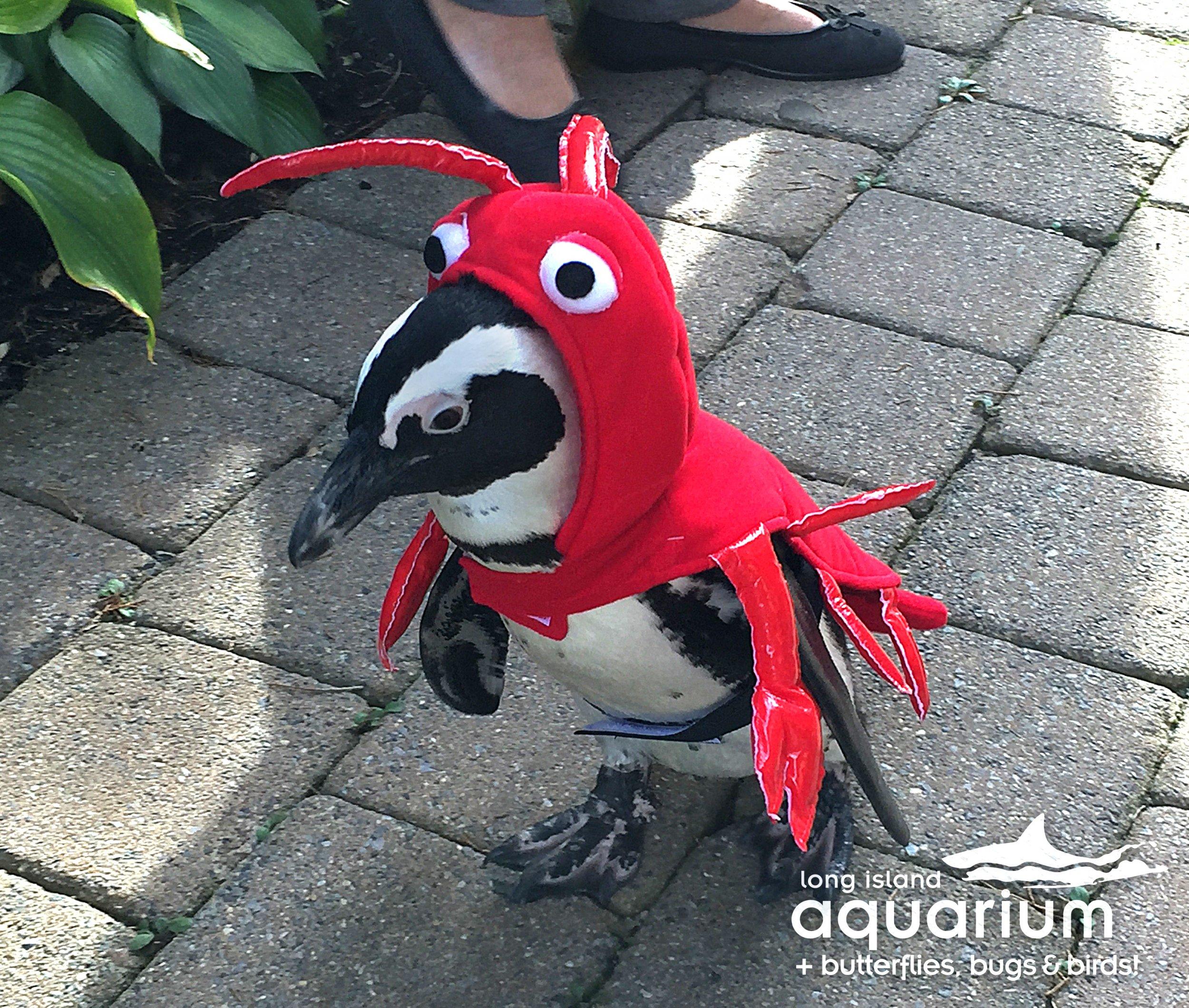 Lobster Penguin