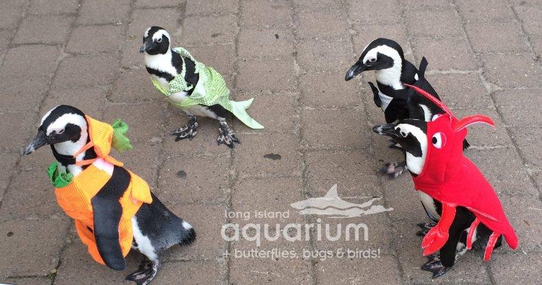 Halloween Penguins