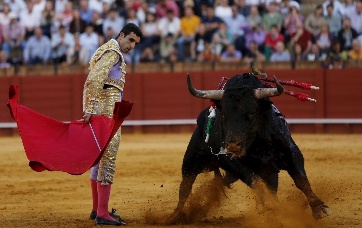 Bullfight matador