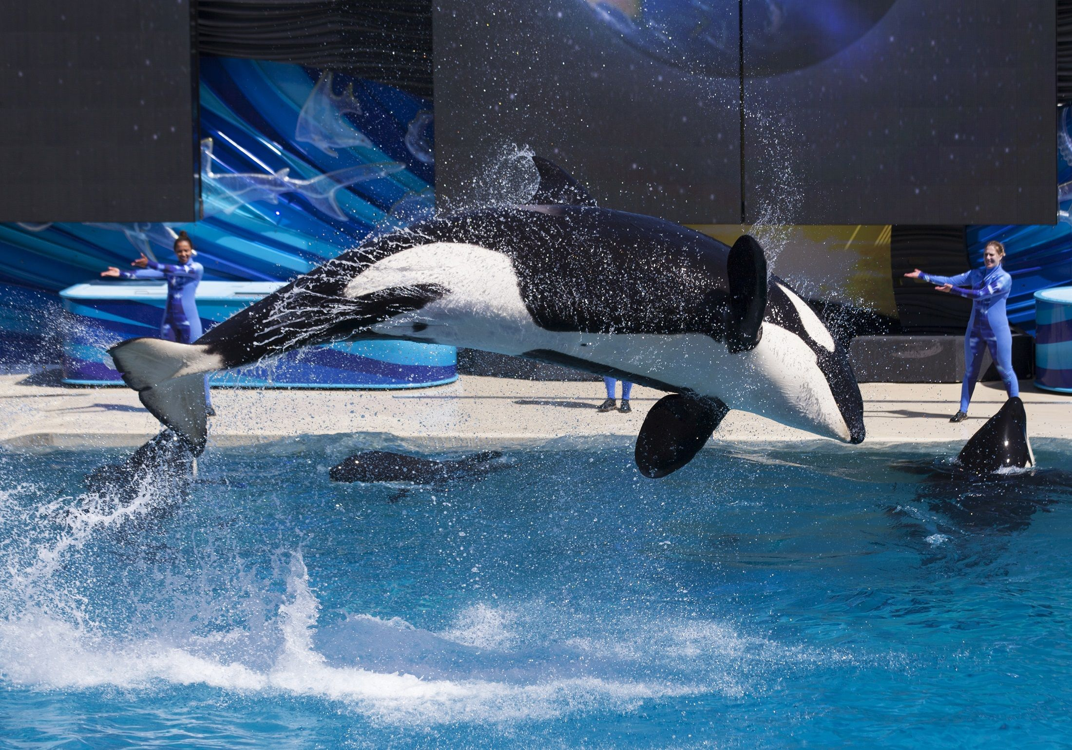 dolphin captivity research paper Current research projects  in the wild and in captivity, dolphins often use their bodies, pectoral fins and dorsal fin to rub the bodies, pectoral fins, dorsal fin .