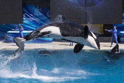 1109_SeaWorld_end_killer_whale_shows_01