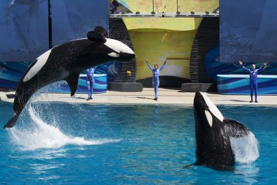 1110_SeaWorld_killer_whales_01