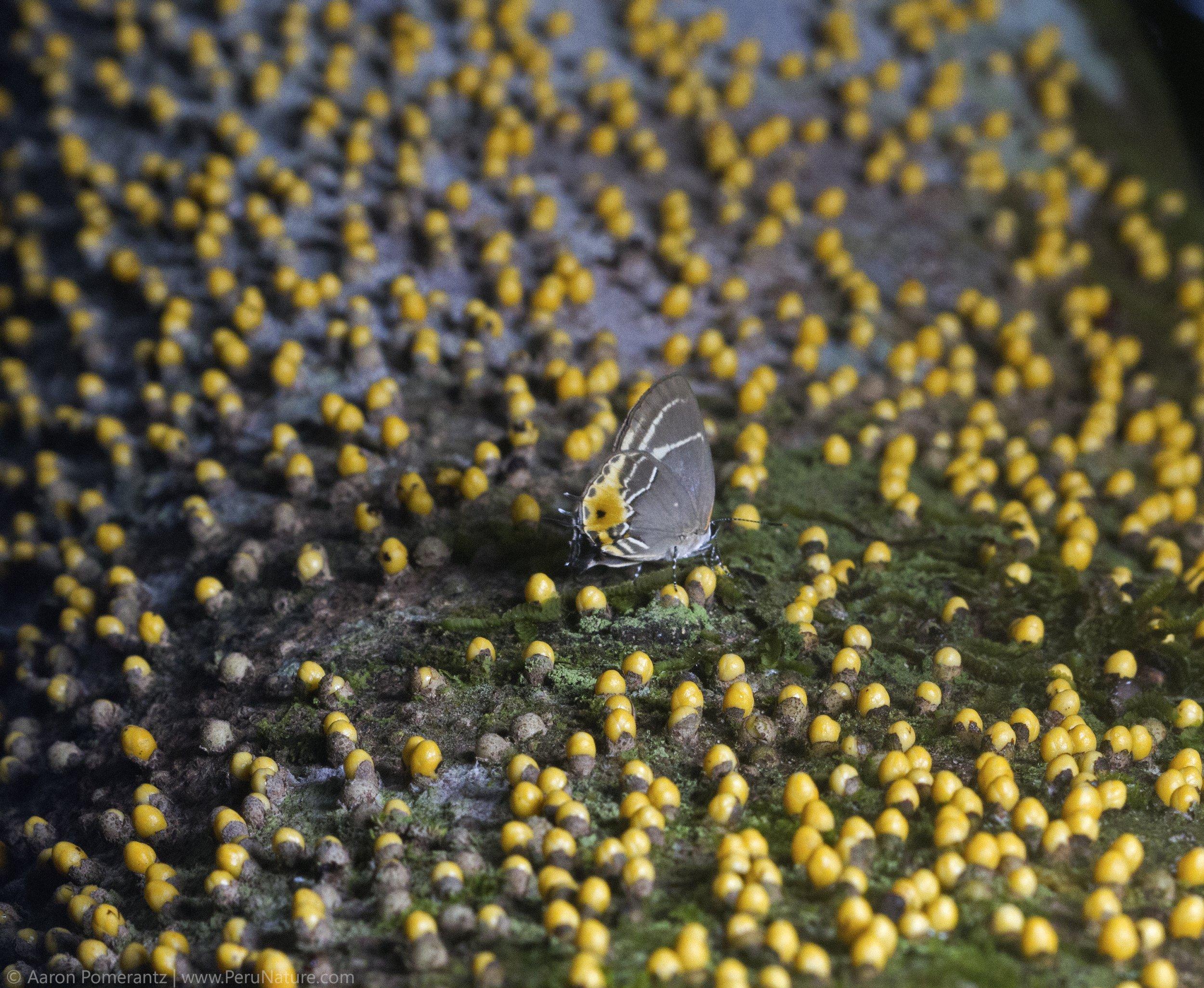 6 Butterfly on Tree