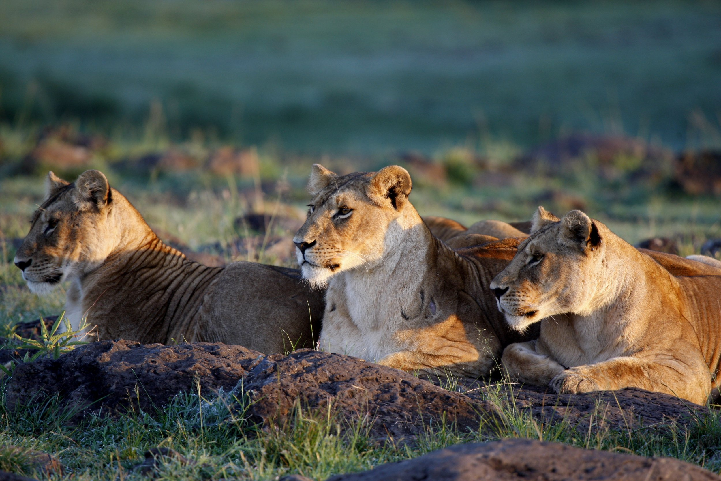 1209_lions