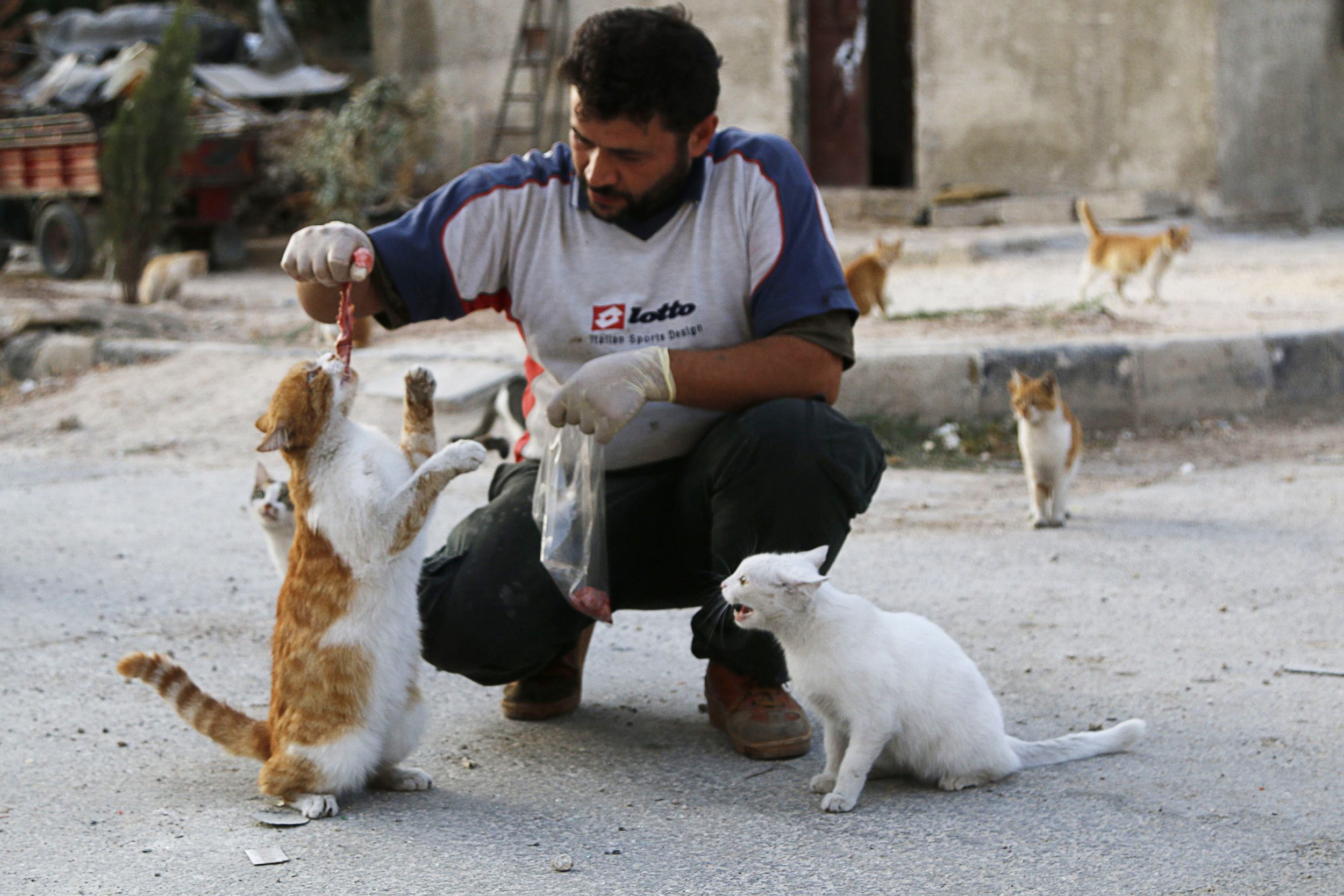 Feeding Syria's Abandoned Cats