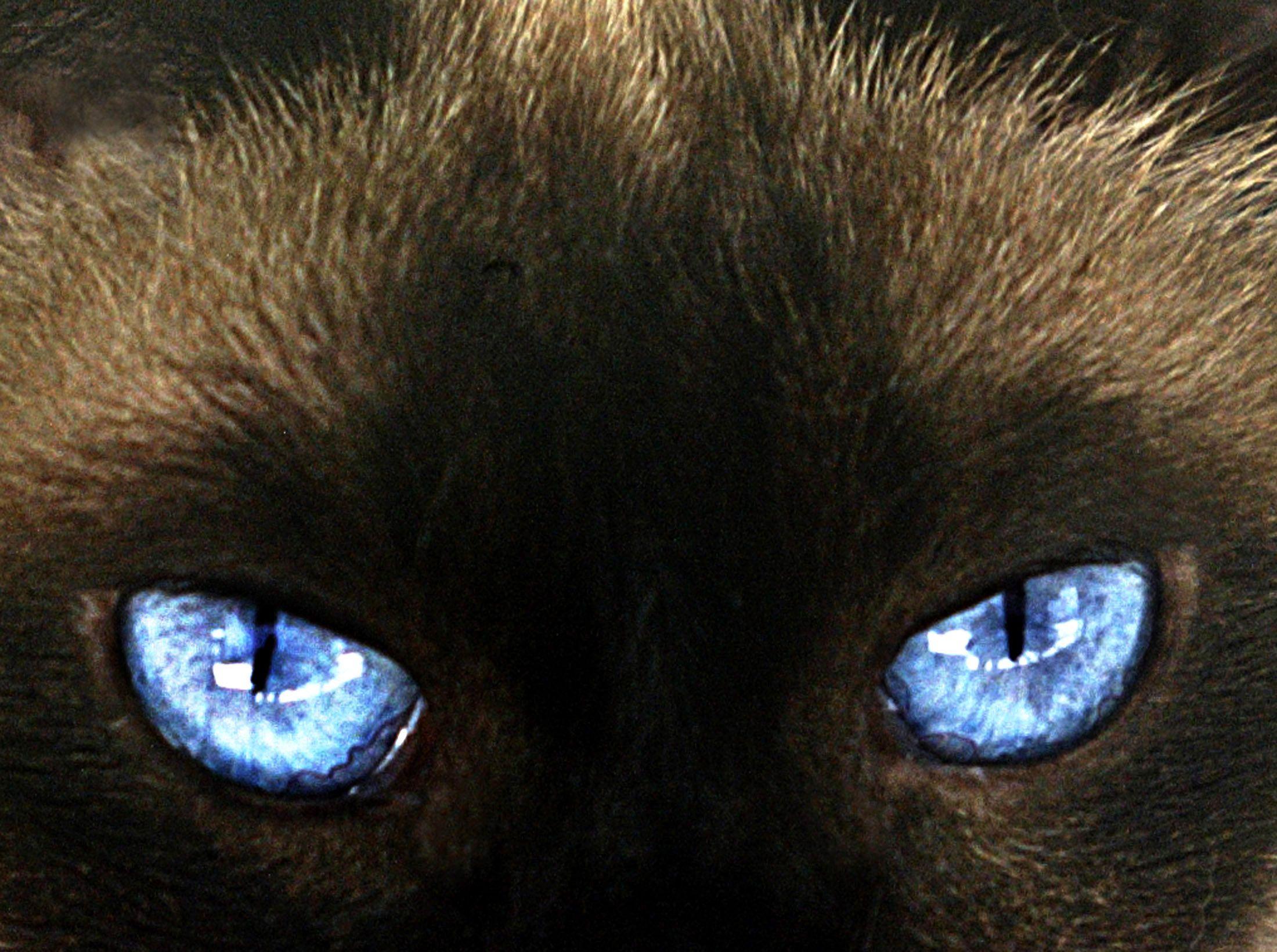 12_26_cat_eyes_01