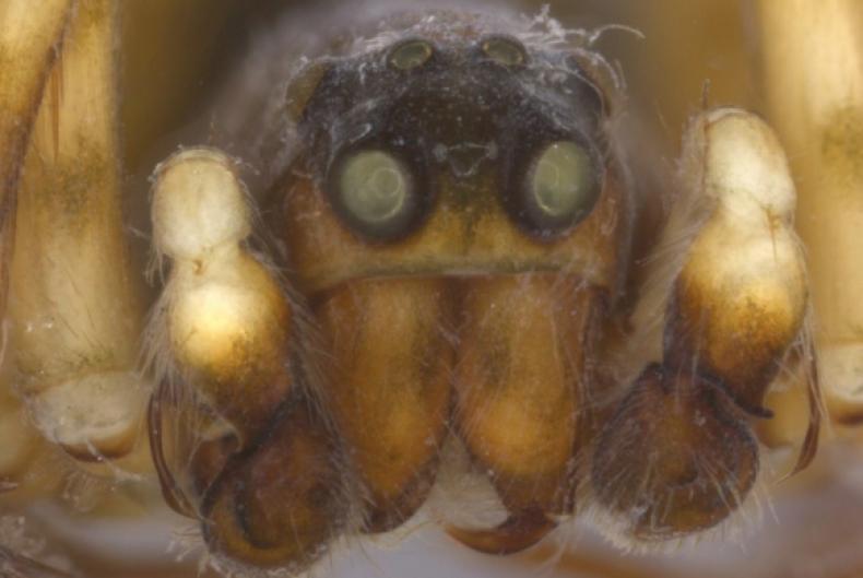 musical-spider