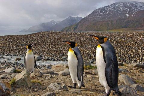 01_15_Antarctica_09