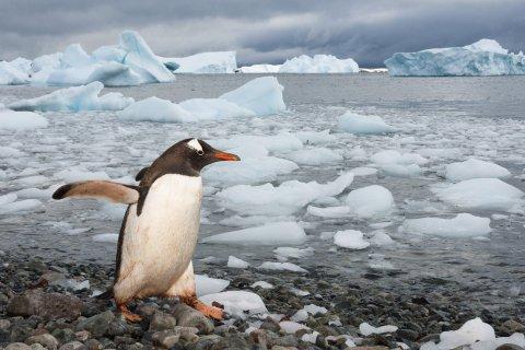 01_15_Antarctica_06