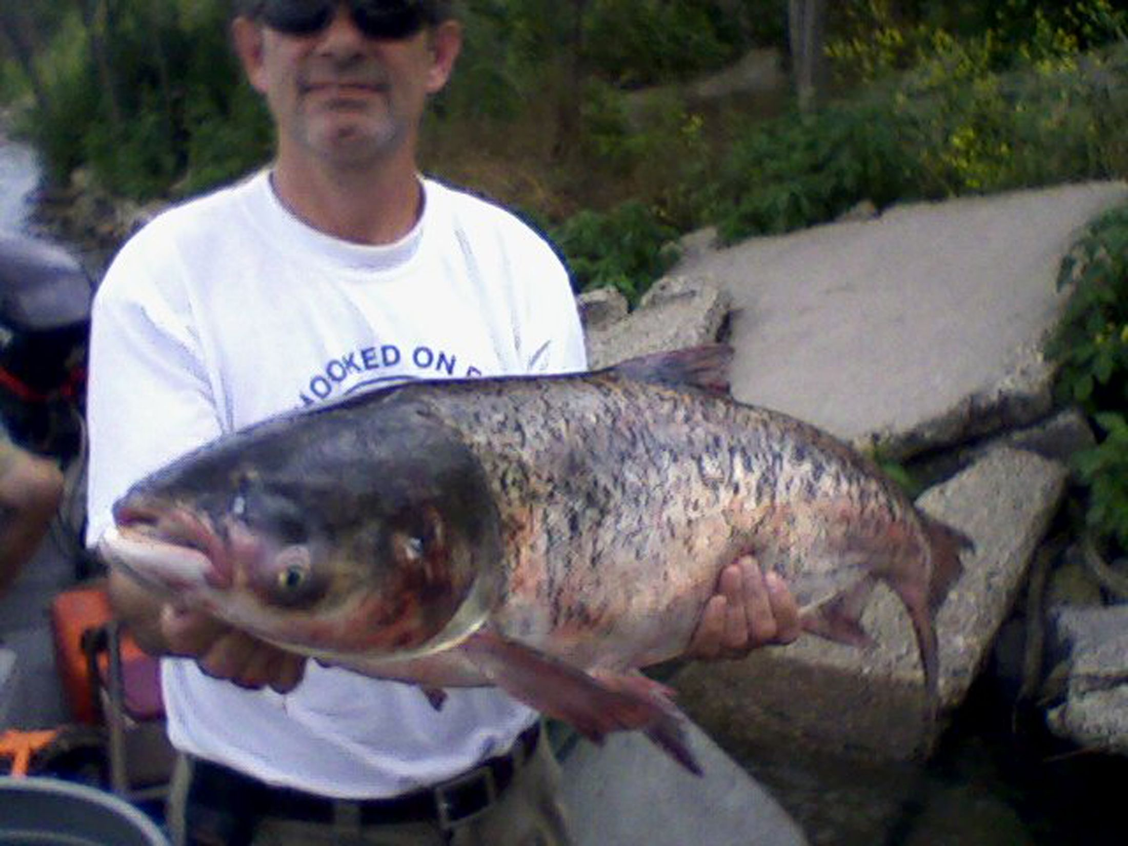 Bighead-carp.05jan2015