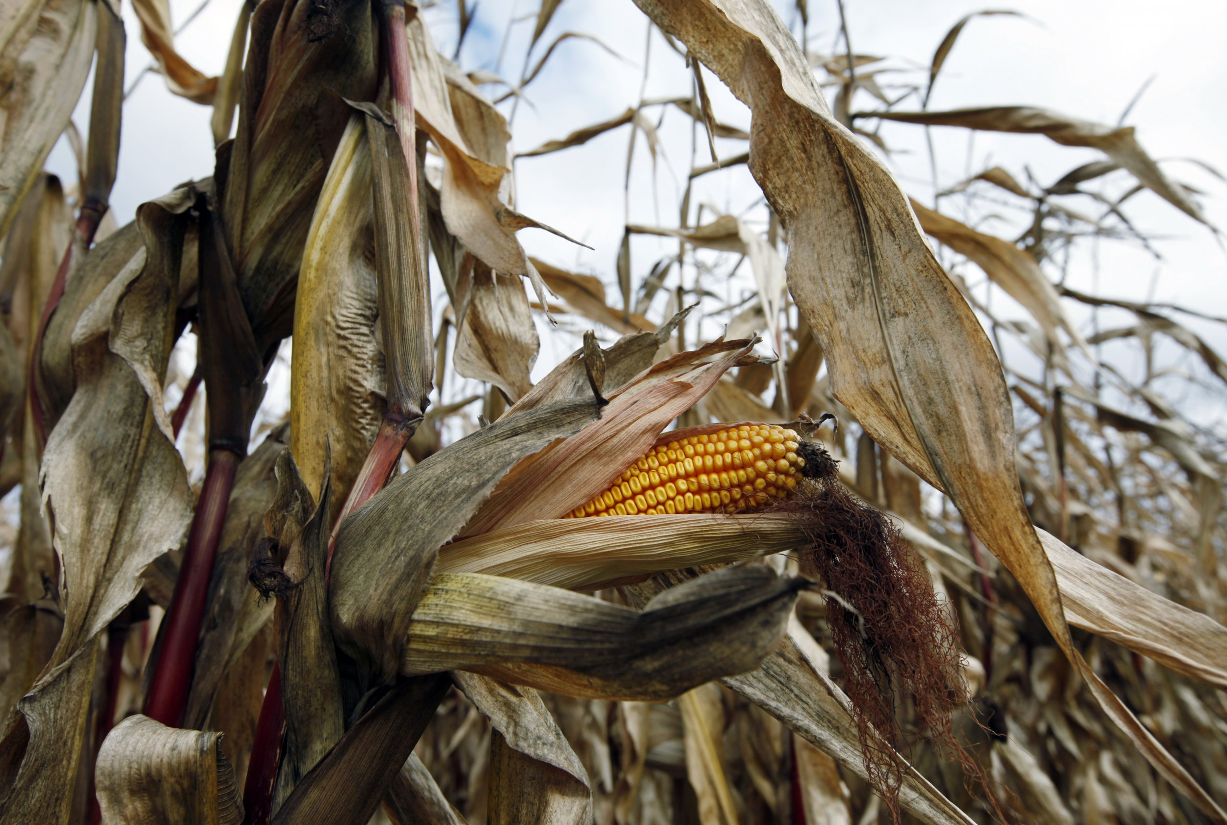How to Combat the Four Growing Threats to Global Food Security