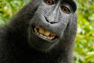 01_07_Monkey_Selfie_01