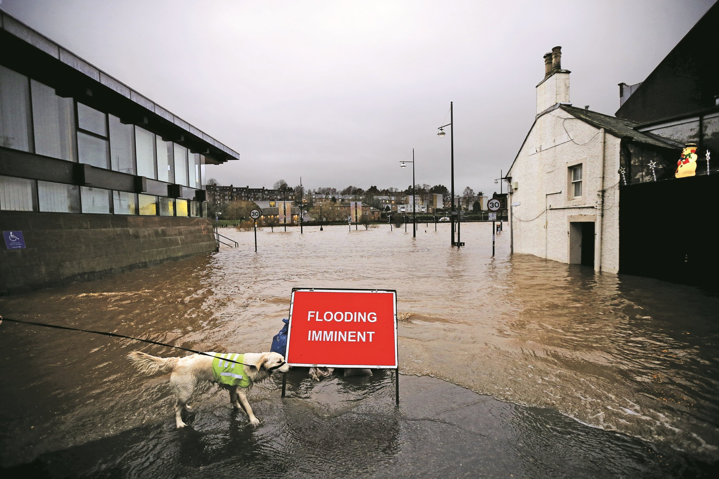 A dog on a flooded street in Dumfries, Scotland, December 30, 2015
