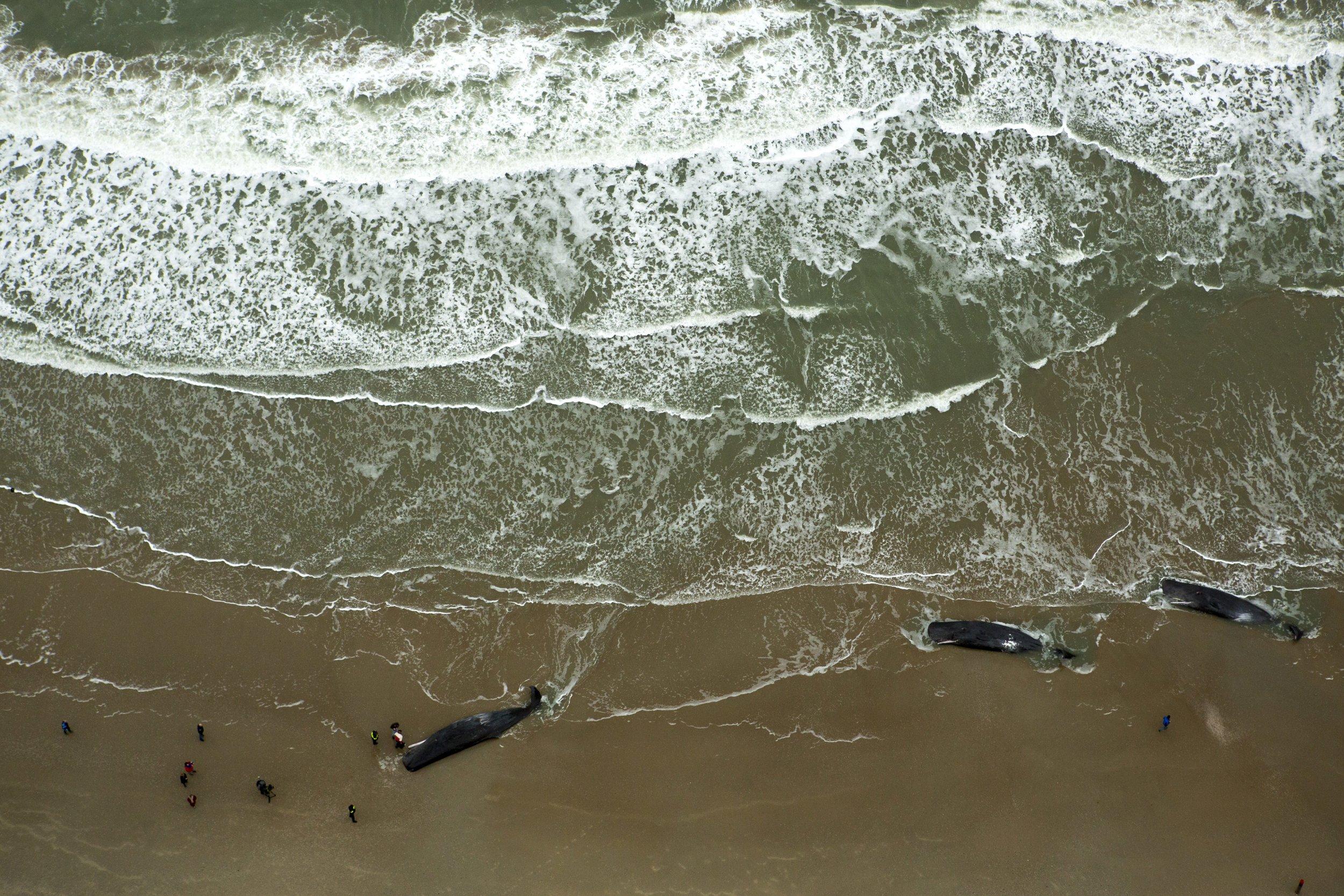North Sea Ailing