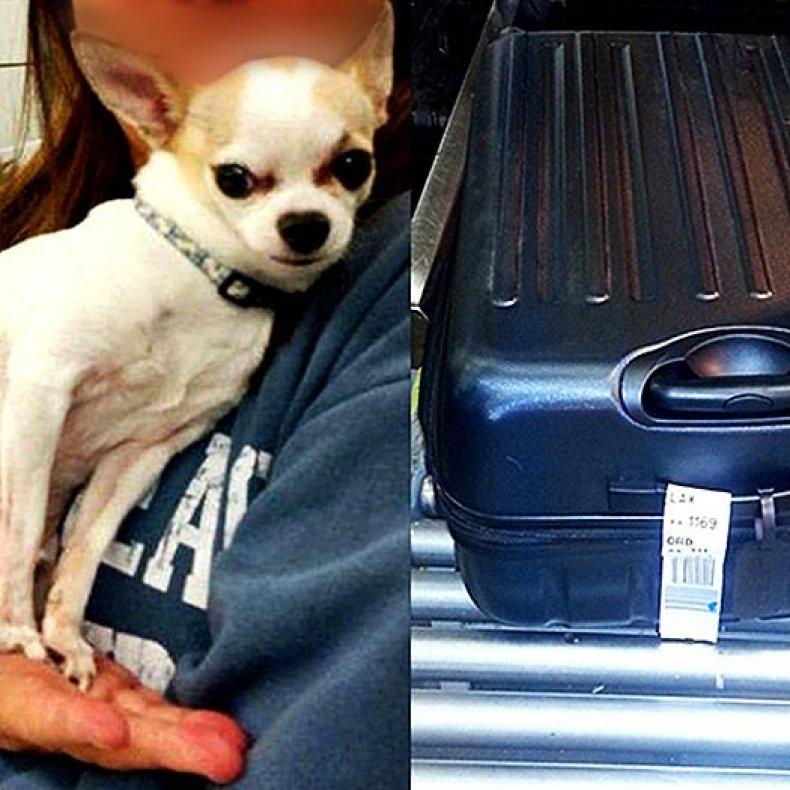 1-22-16 TSA chihuahua