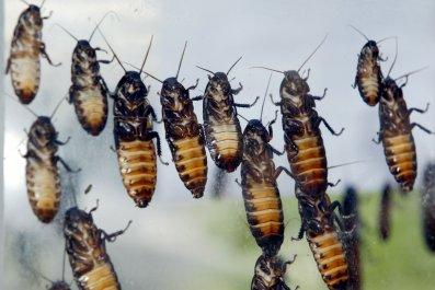 Cockroaches are So Romantic