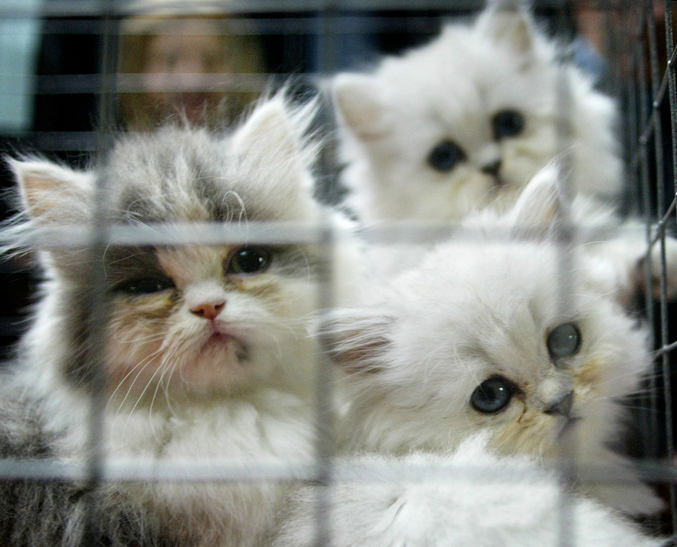 Kittens sold for dog fights