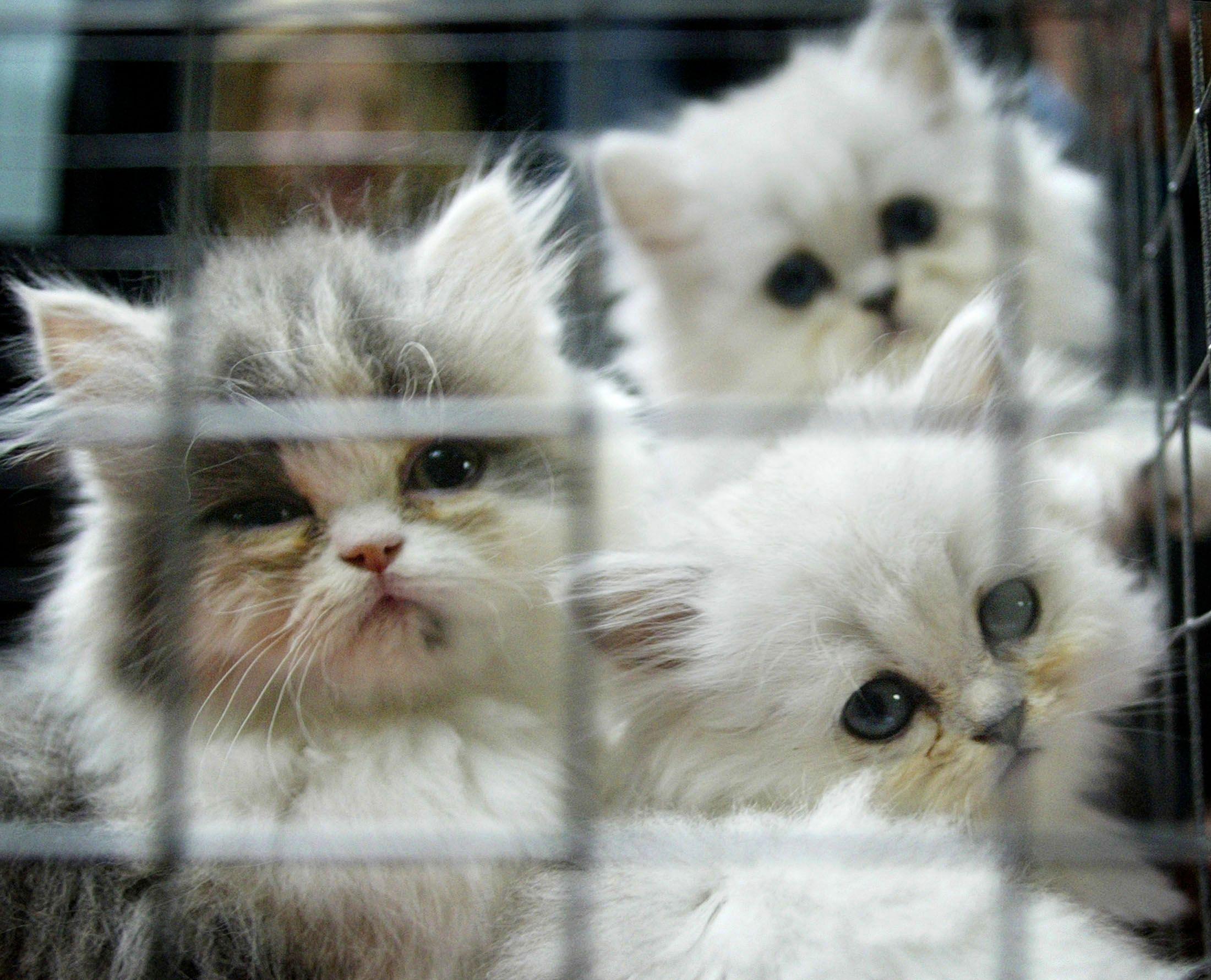 Older cat and kitten behavior