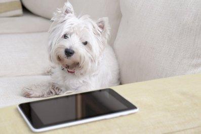 dog whatsapp whatsyapp fetch app