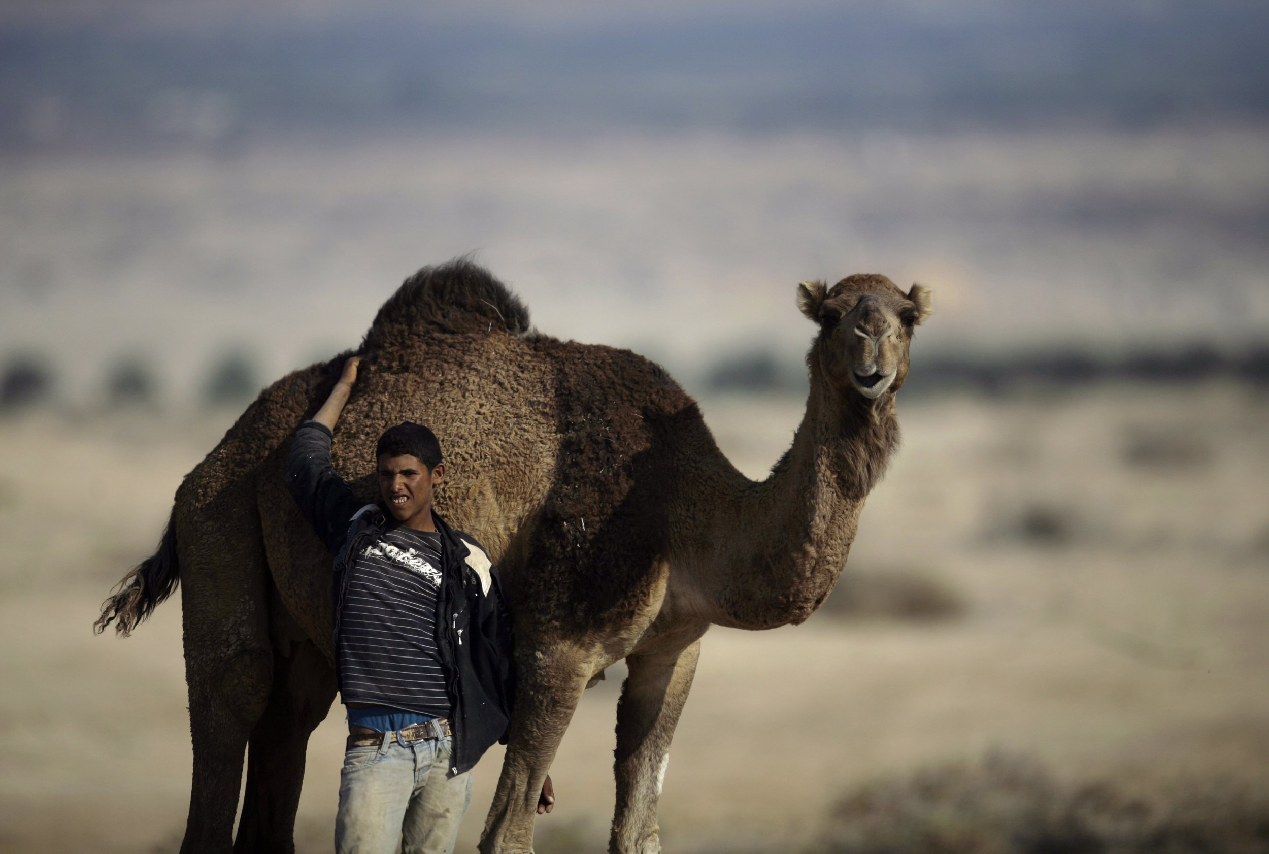 0127_Israel_Camel_WestBank_01