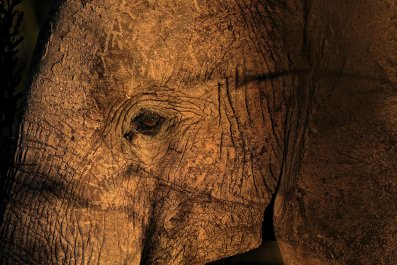 Suspected elephant poachers killed Roger Gower in Tanzania on Friday.