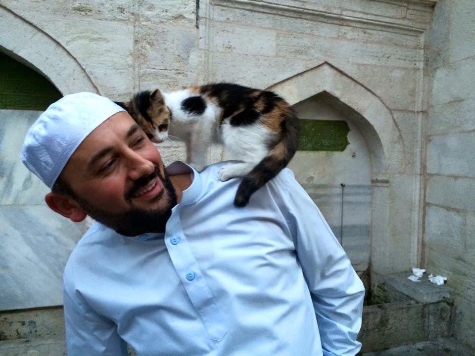 Istanbul Cats Middle East.