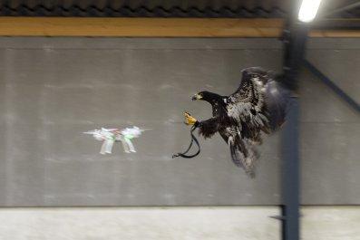 drone eagle catcher uav quadcopter police