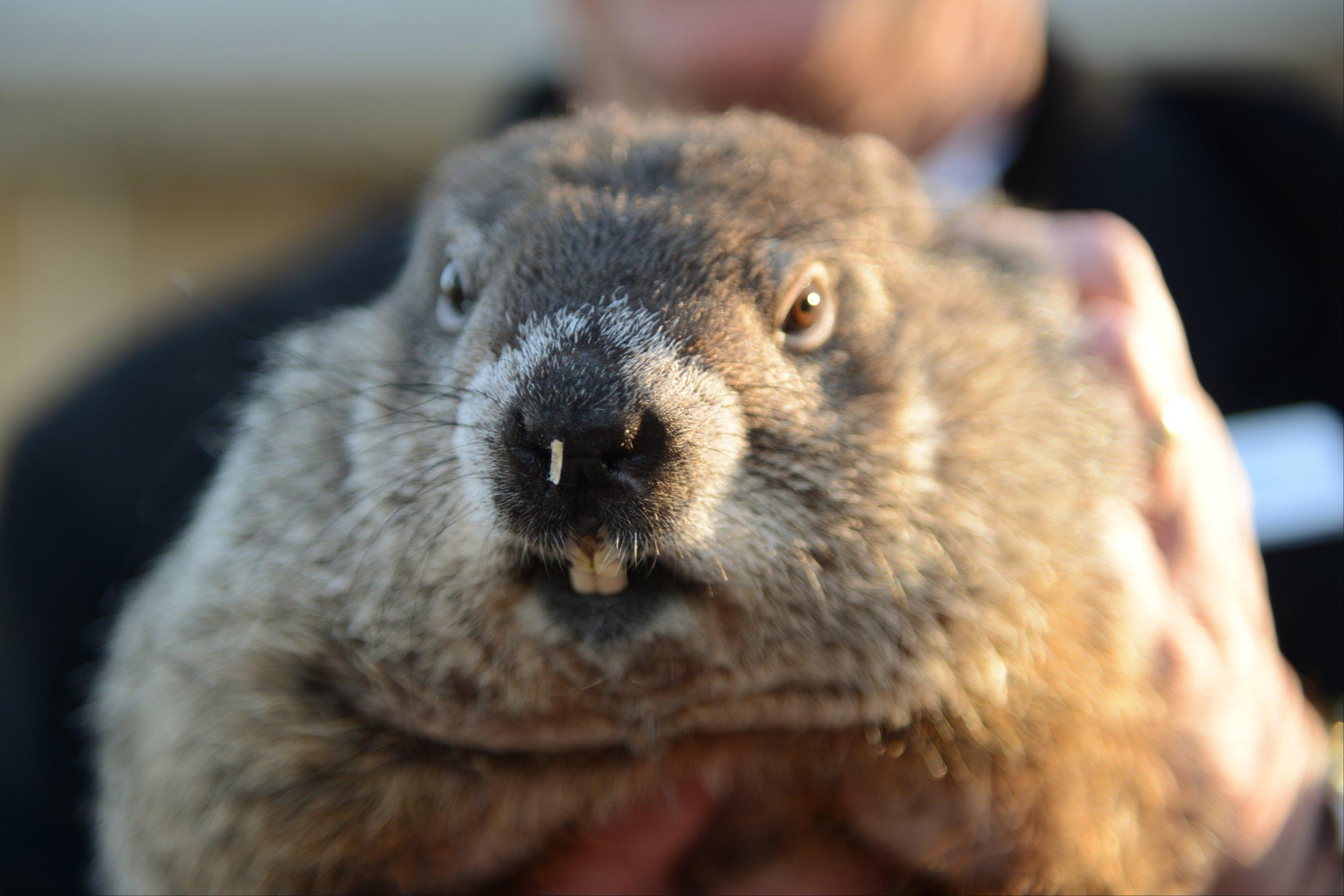 02_02_groundhog_day_01