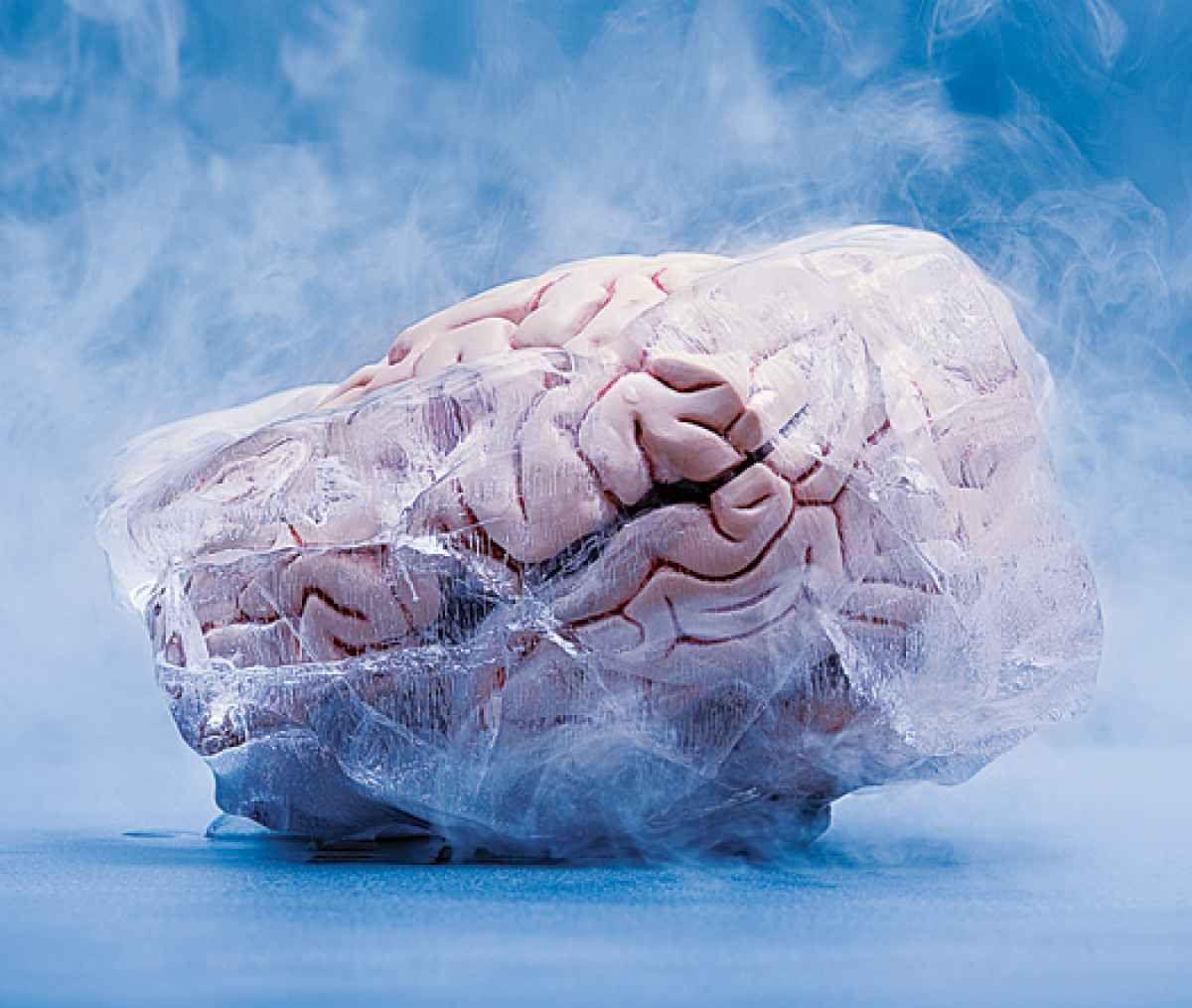 cryonics rabbit brain cryopreservation frozen