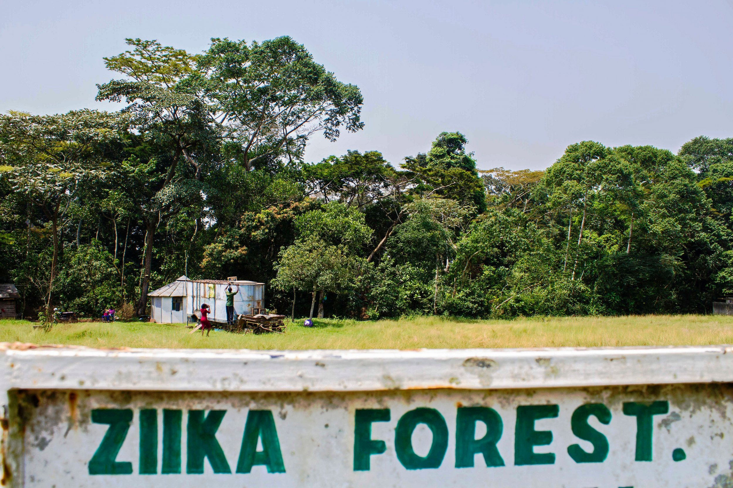 The Zika forest in Uganda, where the Zika virus was discovered in 1947.