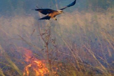 bird-fire