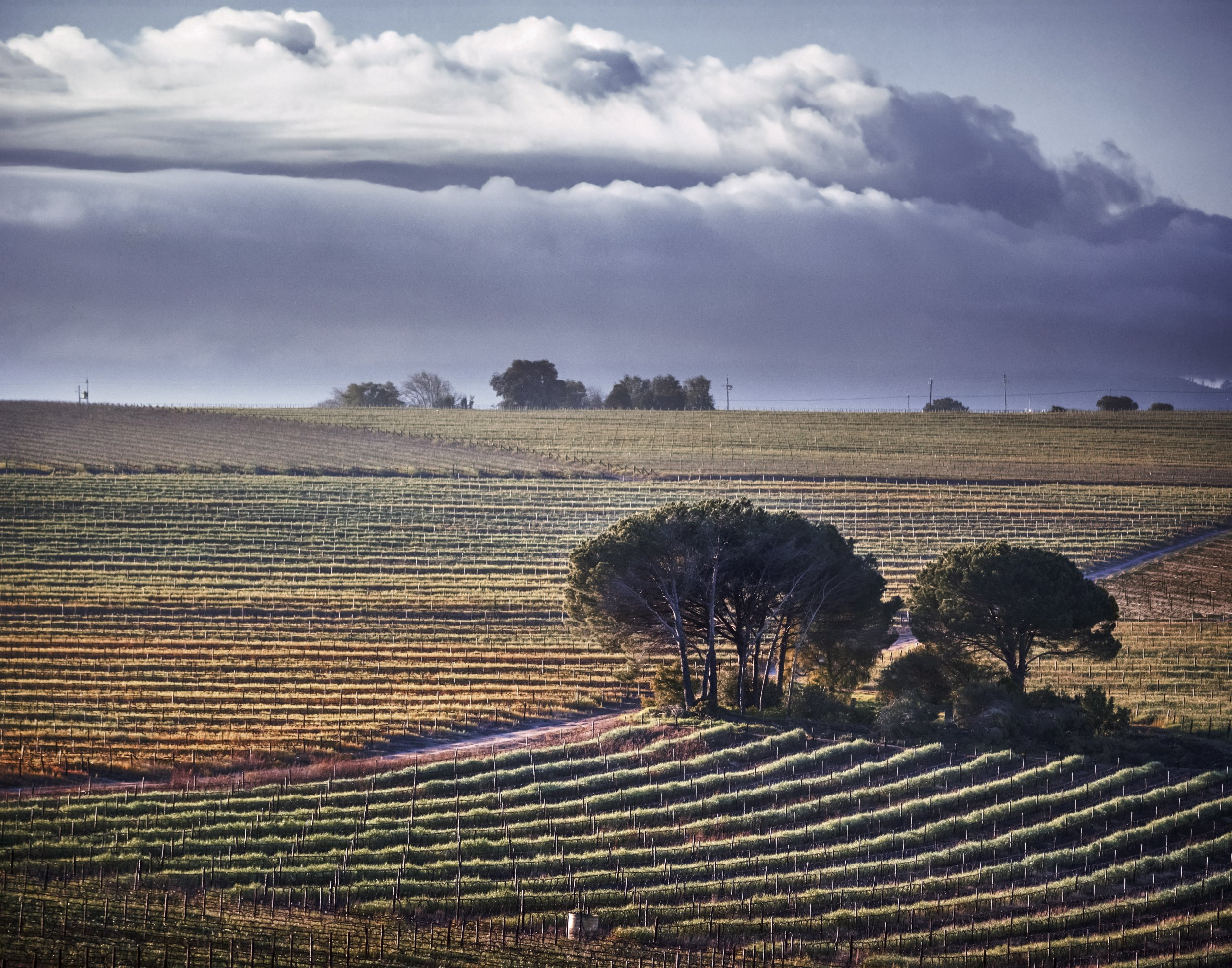 02_26_CapeWinelands_01