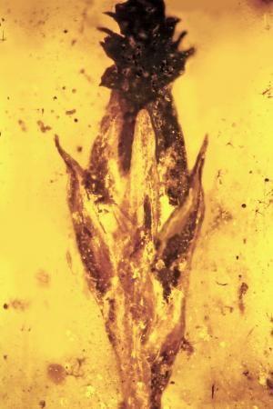 Flower fossil