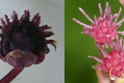 parasitic-plant-up-close