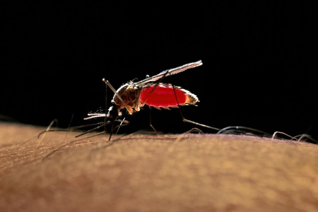 causes of the zika virus spread 4 zika cases in florida were likely spread by local mosquitoes it can cause a condition called case of zika virus, likely spread by.