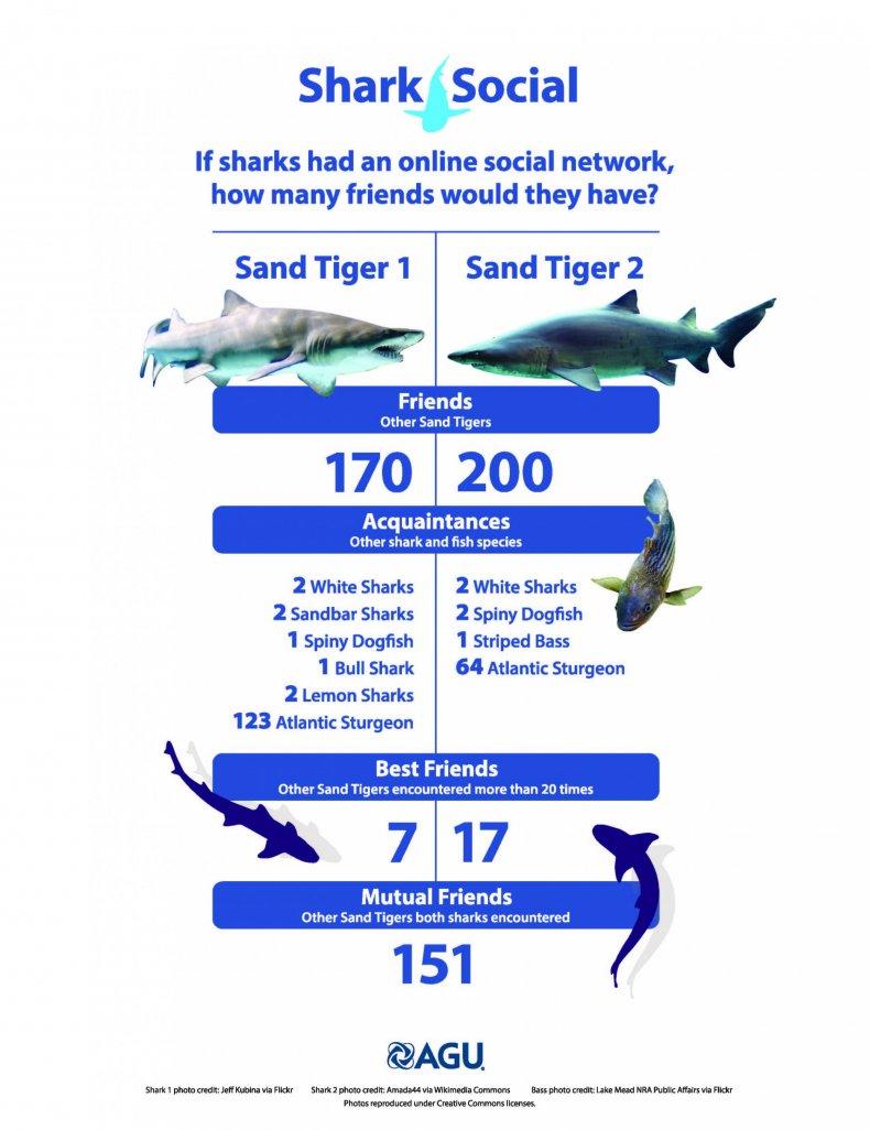Social lives of sharks