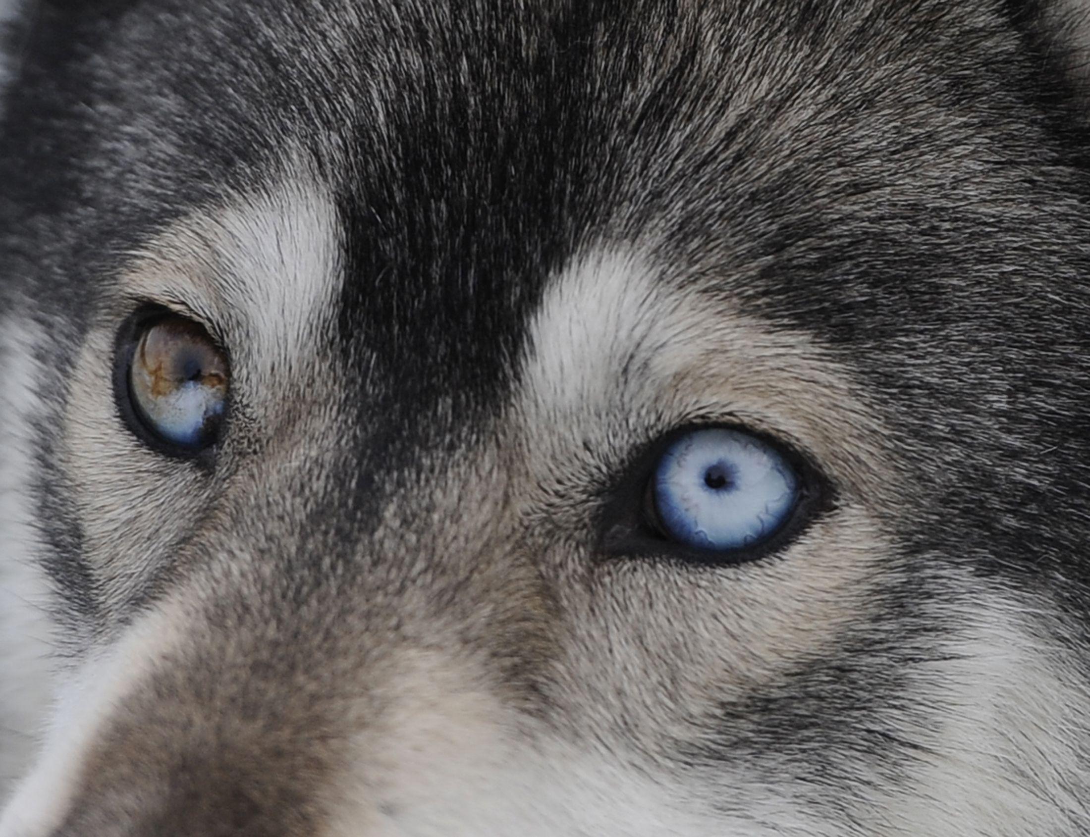 Resultado de imagem para eyes dog