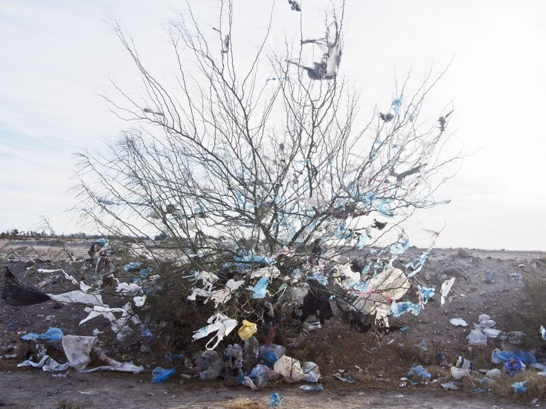 Bags on a tree