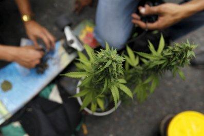 Marijuana plants at demonstration