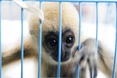 Facebook traffic endangered animals Gibbon