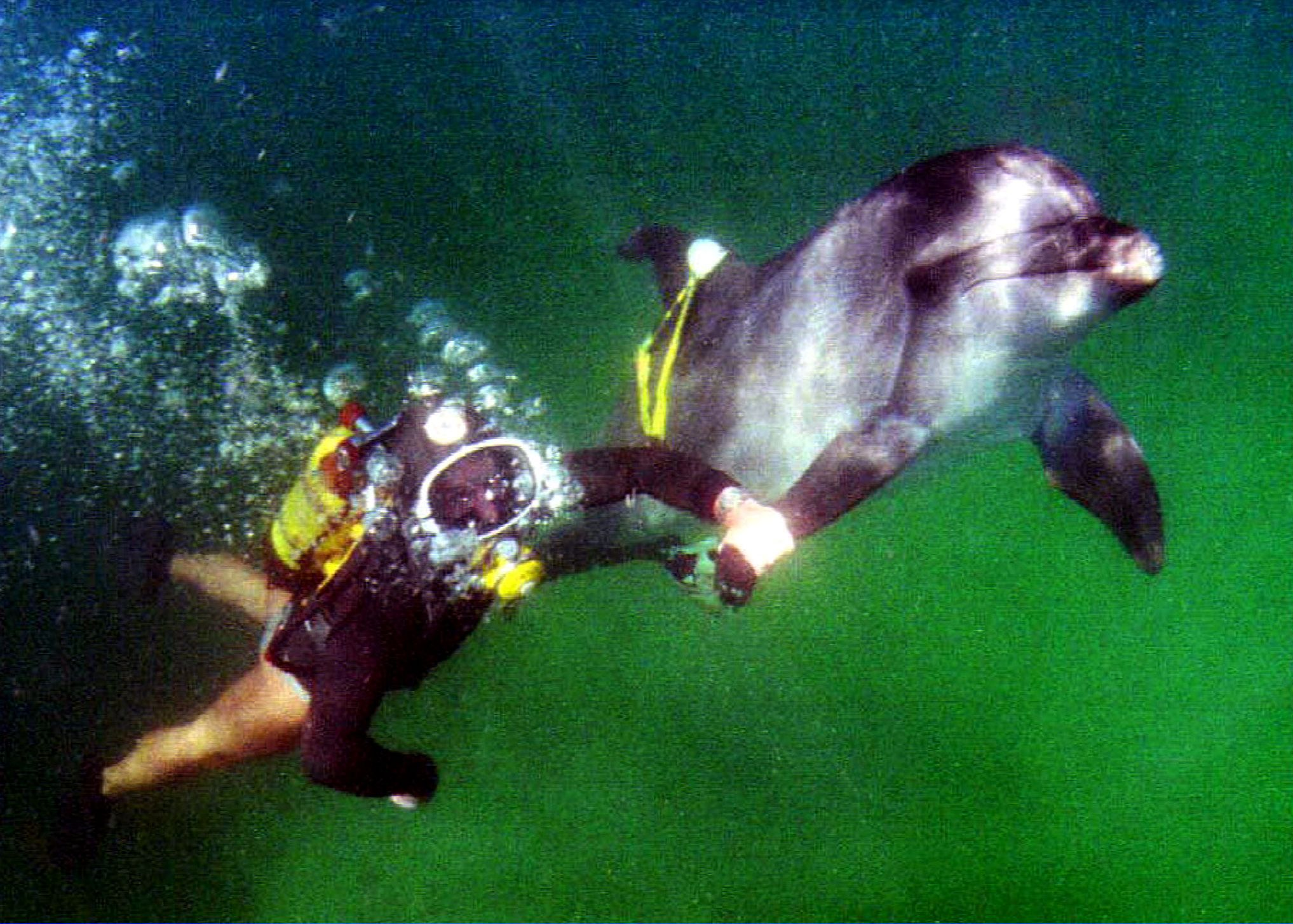 Soviet diver with dolphin